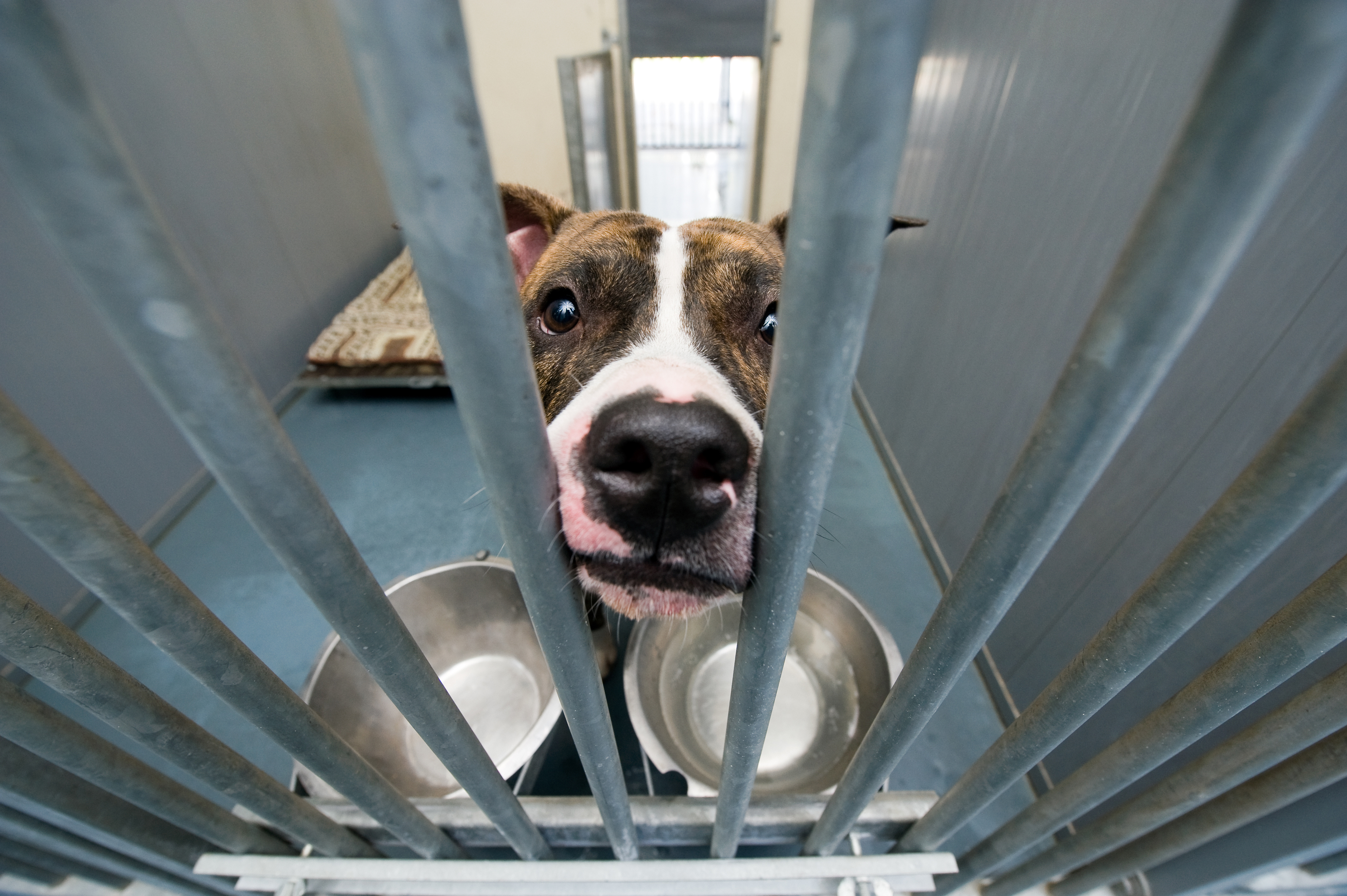 Worauf du beim Tierschutz achten solltest