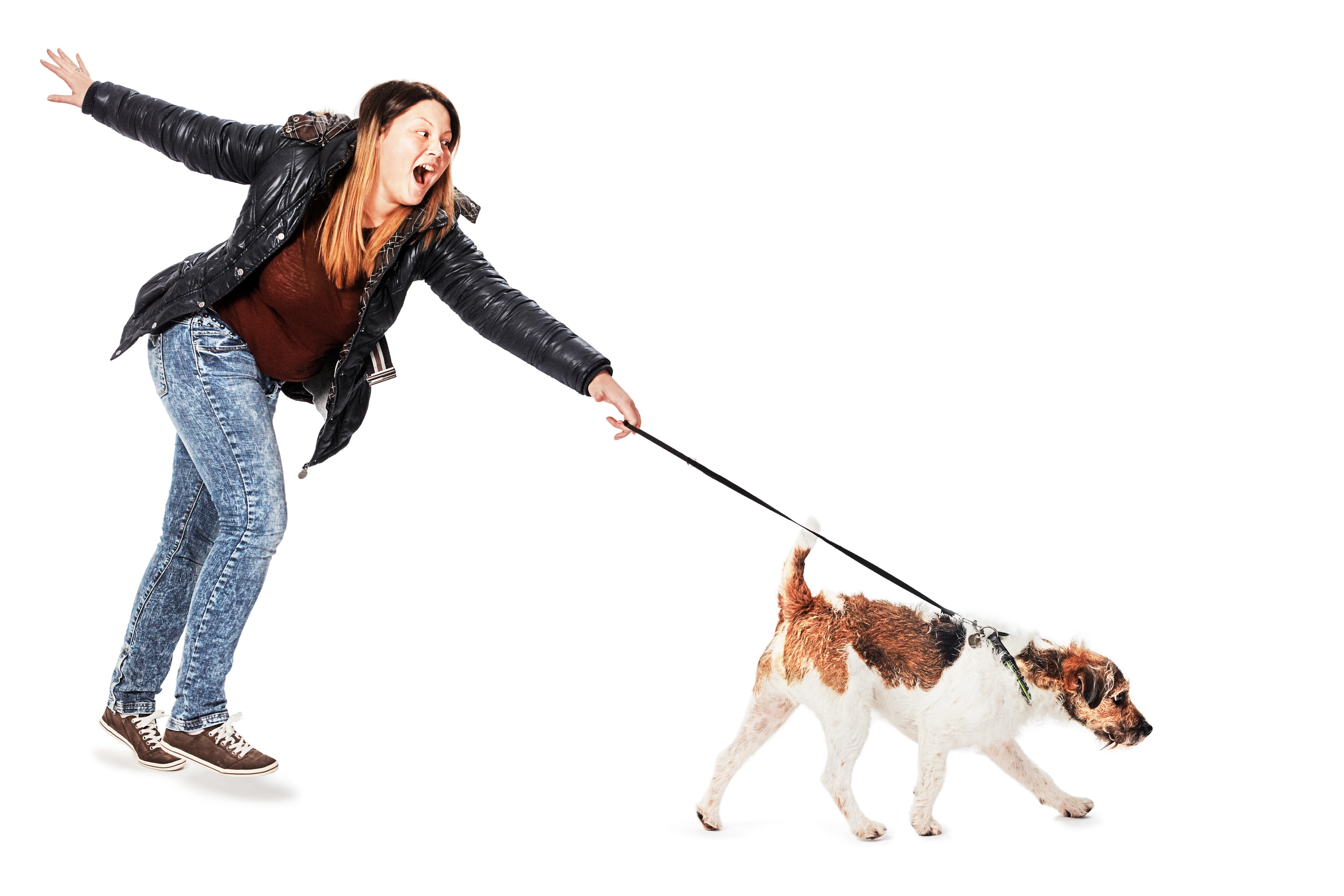 Angeleinter Hund – und nun?