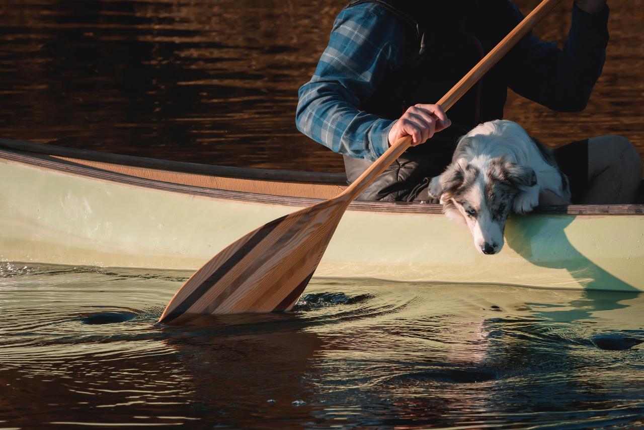 Kanu mit Hund