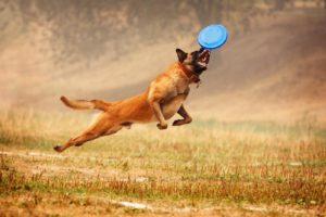 Frisbee Hund