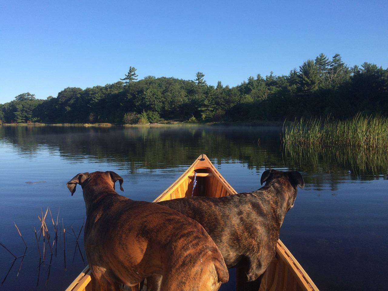 Kanu-Wanderung mit Hund für Anfänger