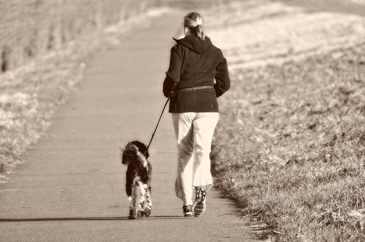 walken mit hund
