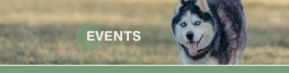 Events mit Hund Shop