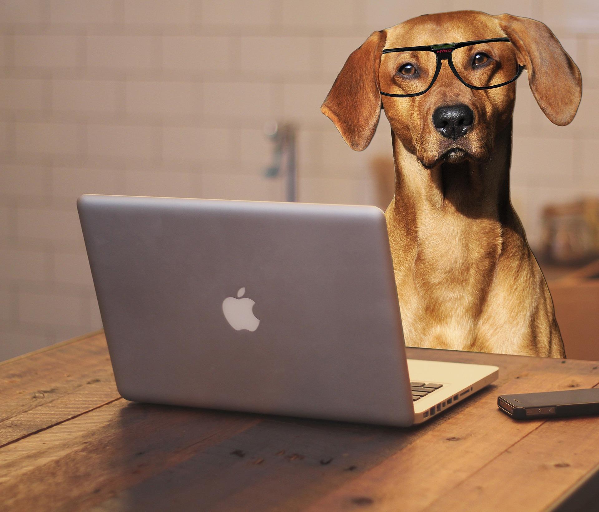 Bürohund – darauf musst du achten