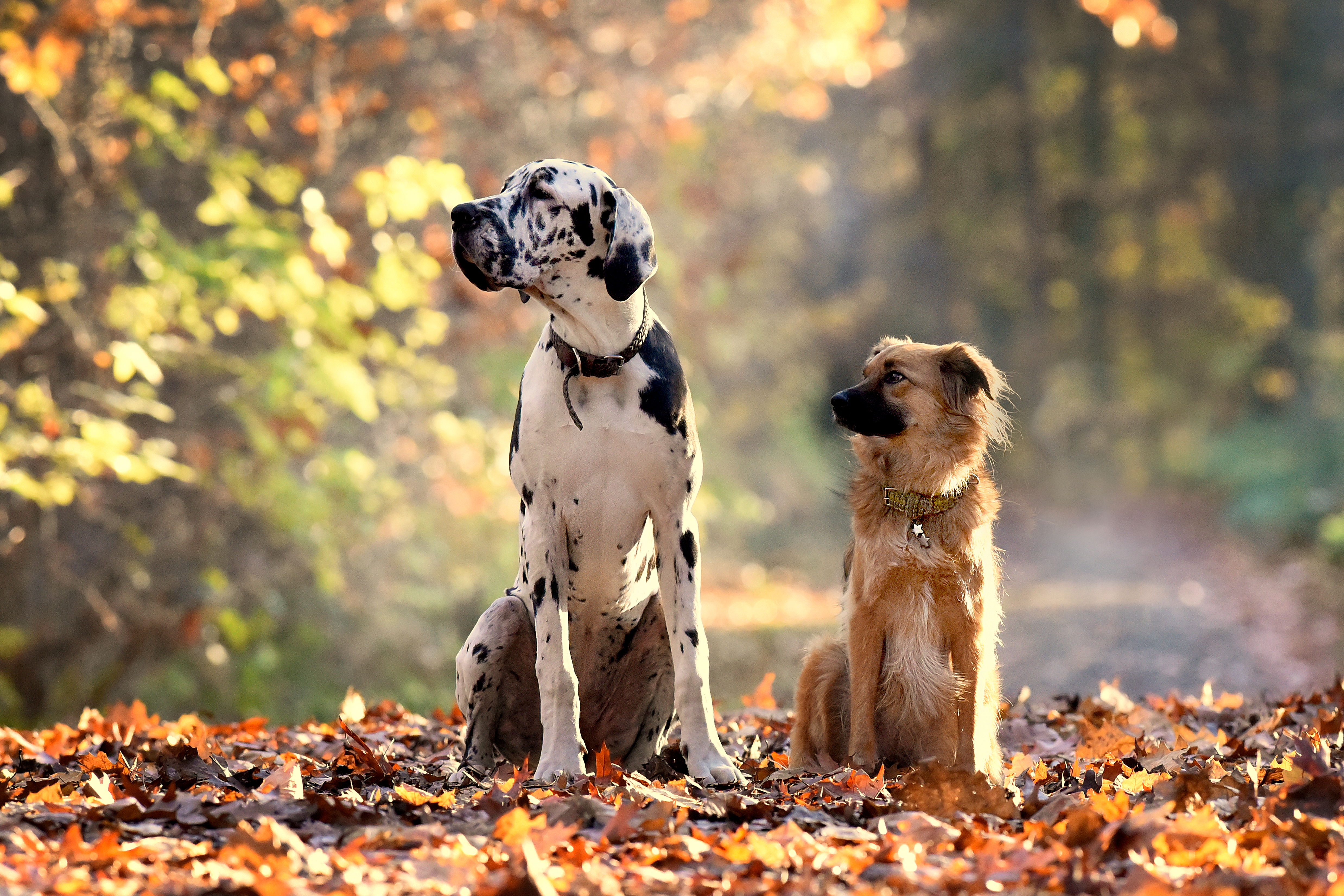 Hund im Herbst: 7 Tipps für die bunte Jahreszeit