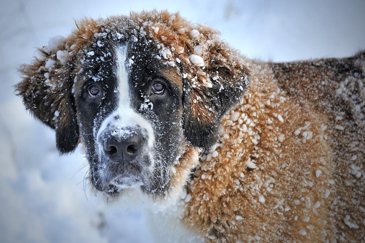 Hund im Winter: Mit diesen Tipps kommt ihr gut durch die kalte Jahreszeit