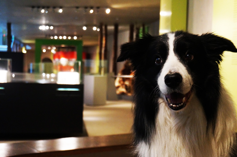 Hund im Museum