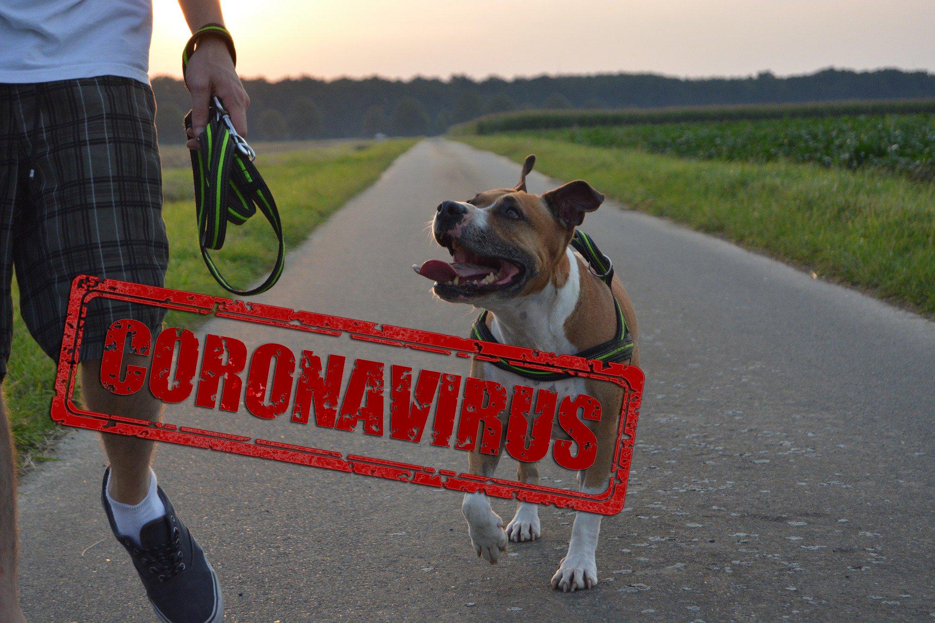 Quarantäne mit Hund: Was geschieht bei Corona-Infizierung mit meinem Hund?