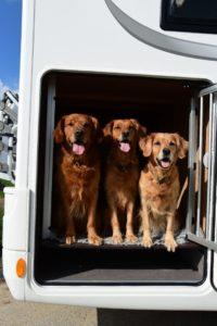 Waumobil Grefrath - im Wohnmobil mit Hund unterwegs