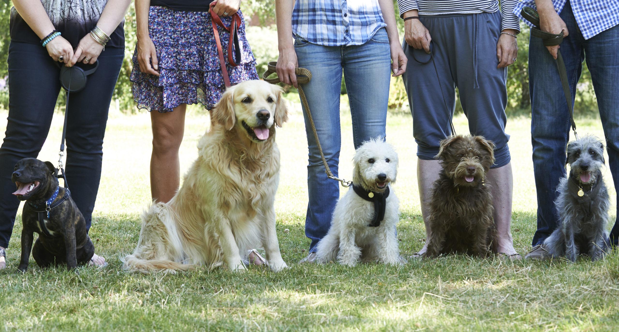 Beruf Hundetrainer: 8 Dinge, die du wissen solltest